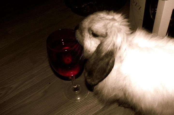 Lenni is a wino like his momma